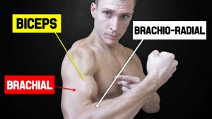 Miniature-2-exercices-biceps