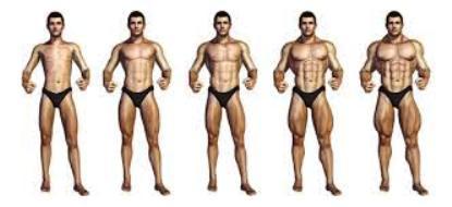 Combien de muscles peut-on gagner