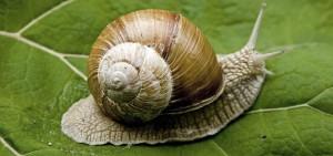métabolisme de l'escargot = 3 calories par jour